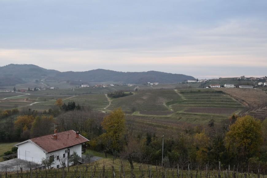 vigne dell'azienda Marjan Simcic